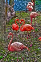 HDR - Flamingo Heart by ando-san