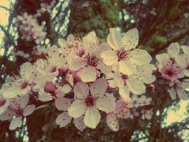 Blossom by YourEvilAddiction