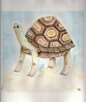 tortue by Lamamilie