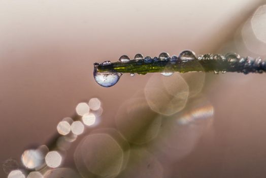 Drops in the morning by Detailmagie