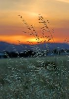Tall Grass Blowing in the Wind by robgbob