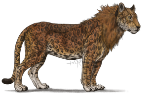 Leopon by Riixon