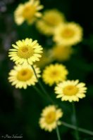 Yellow-green. by Phototubby