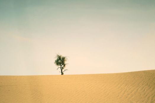 Deserted Tree by ArmizO