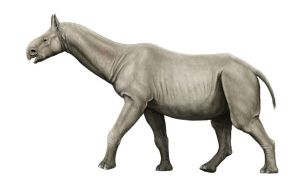 Paraceratherium by yty2000