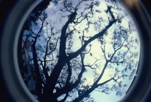 branches by ocit