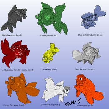 Auratus Ghoti Breeds as of June 2015 by KDVal