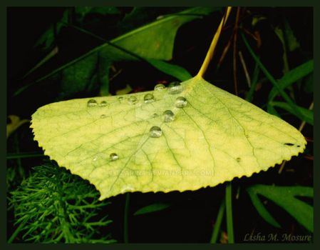 Aspen Leaf I by Tzarina