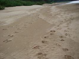 Footprints on sand 2 by Panopticon-Stock