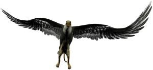 Griffin - Gryphon by markopolio-stock