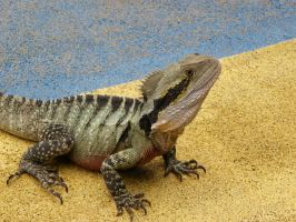 Lizard Stock 01 by Shutter-Shooter