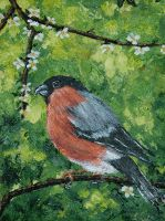Bullfinch by starmist