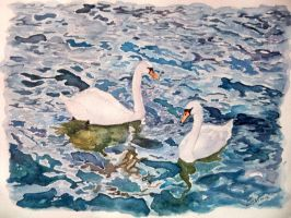 swans by cristineny