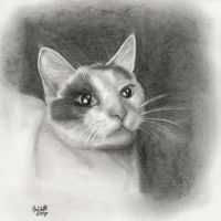 A Drawing of my Cat by PurpleDaizie