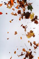 Floating leaves 002 by ISOStock