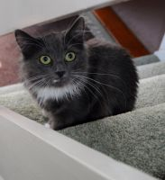 Loki On The Stairs by Forestina-Fotos