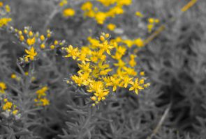 The Delicacy of Yellow by SnappyIrides