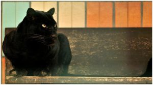 Black Beauty by Svenimal