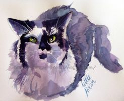 The Cat by Little-Roisin