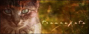 trancefate - shadowclan by xxtheSilent