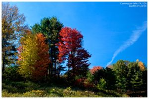 colours of autumn by Echo1034