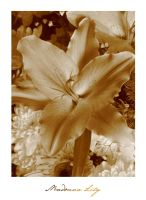 Madonna Lily by Condanna