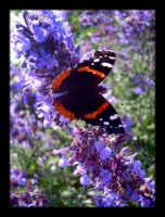 Red Admiral by Jenna-Rose