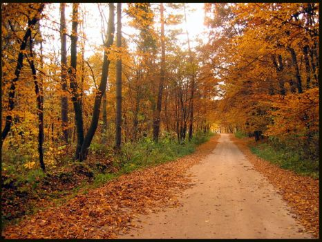 road to winter by Marchelo