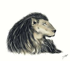 Lion by Jefferson-Apgar