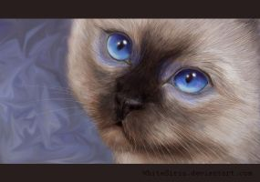 blue eyes by WhiteSirin