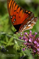 Hungry Butterfly by Annushkka