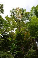 Fern trees of Martinique by A1Z2E3R
