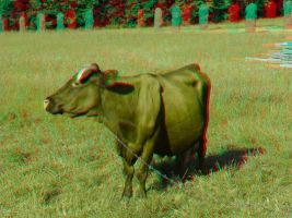 The Cow 3D Anaglyph by yellowishhaze