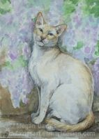 Wisteria Cat ACEO by Pannya