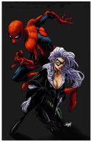spidey and black cat by logicfun