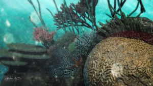 3D Coral Reef by wadenein