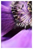 Anemone 2 by LauraAshford-FineArt