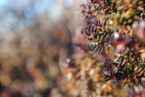 Crowberry by MesmerizedByNature