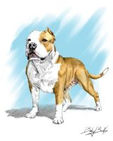 American staffordshire terrier by Mikecardoso
