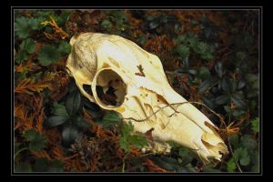 Doe Skull 'Perspective 3' by fetus0nthebeat
