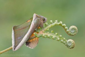 Owlet Moth ( MG 5503 copy) by orionmystery