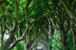 The Dark Hedges by dcheeky