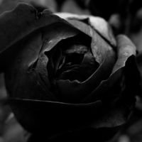 Ten Black Roses by DpressedSoul