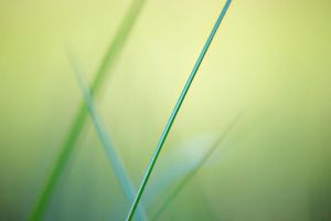 grass 4 by jagerion