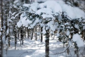 Pine Branches by Love2B