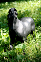485 breyer - achilles by coffinfodder