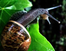 Mr. Snail delivering mail by afireinsideme