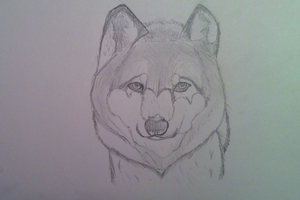 Quick Sketch #1 Wolf by thunderwingthegamer