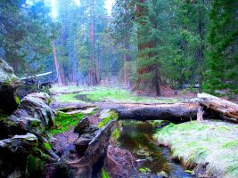 fallen tree over creek--Sequoia by ThereseDaniels
