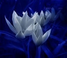Blue About by Callu